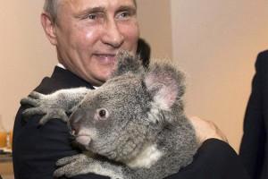 1416206843_putin-i-koala