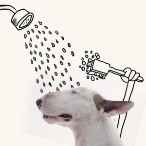 18193760-R3L8T8D-650-Jimmy-the-Bull-Terrier20__605