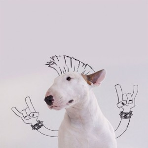 18194210-R3L8T8D-650-Jimmy-the-Bull-Terrier2__605