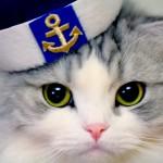В Эстонии готовы нанять кота на корабль