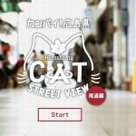 Создана панорама уличных видов для котов — Cat Street View