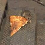 Крыса с пиццей в зубах стала воплощением американской мечты