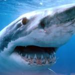 10-летний мальчик отбился от нападения акулы ногой
