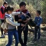 Посетители зоопарка до смерти запугали павлинов, делая с ними селфи