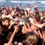 Маленький дельфин погиб из-за туристов, которые делали с ним селфи