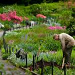 Ученые заявили: работа на огороде продлевает жизнь