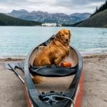 Обнаружен самый фотогеничный пес в мире