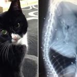 Кошка, в которую выстрелили 30 раз, чудом выжила