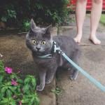 Постоянно удивленный кот — новая сенсация интернета