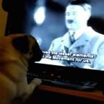 В Шотландии арестован мужчина, научивший своего мопса делать нацистское приветствие