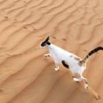 «Дырявый» кот стал новой звездой социальных сетей