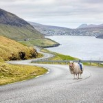 Овцы заменили автомобили Google Street View на Фарерских островах