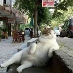В Стамбуле украли памятник легендарному задумчивому коту