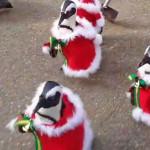 В Японии прошел парад новогодних пингвинов