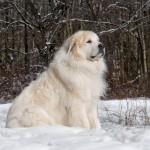 В Сети становится популярной новая «собачья» мода