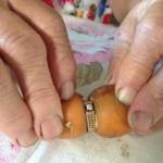 Канадка потеряла кольцо и нашла его спустя 13 лет вросшим в морковь