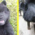 Деревенский житель два года заботился о собаке, а она оказалась… медведем