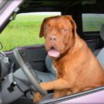 За собаку в машине в Британии теперь можно заплатить штраф $6 500