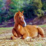 Американское правительство предлагает $1000 за усыновление дикой лошади
