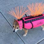 Это не просто смешной костюм для собачек. Эта одежда спасает им жизнь