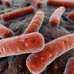 Как избежать заражения плотоядными бактериями