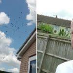 Соседская месть: британец заманил на чужой газон 300 ворон. Не сложно догадаться, что было дальше