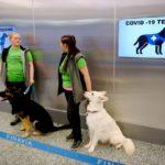 В Финляндии пассажиров аэропорта на коронавирус будут проверять собаки