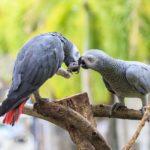 В британском парке изолировали попугаев, которые оскорбляли посетителей