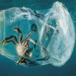 На дне океана лежит более 14 млн тонн пластика