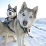 Обама и Трамп стали самыми популярными собачьими кличками в России