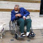 В Турции собака прождала хозяина у стен больницы шесть дней и стала всемирно известной
